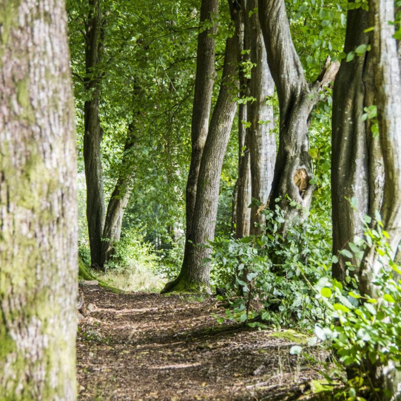 Arpentez les chemins forestiers